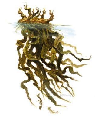 Kelp Angler